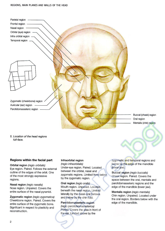 store.bg - Anatomy of the Head - Hristo Kirchev, Jordan Kirtchev ...